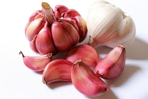 garlic-hardneck